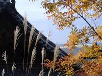 Itijyouji0811025