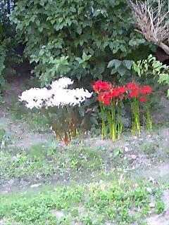 赤頑張れ、白頑張れ