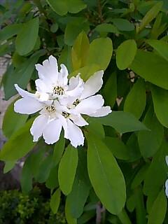 春の花3種
