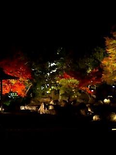 圓徳院ライトアップ