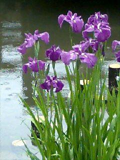 雨の山田池公園