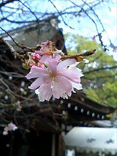 平野神社でみ〜つけた!