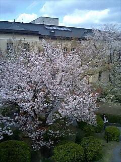 府庁の桜〜携帯編
