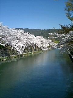 桜の知恩院から岡崎