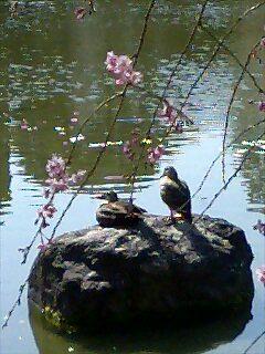 平安神宮〜神苑