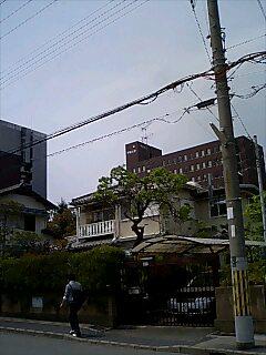Yuzumi Garden
