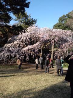21日京都御苑